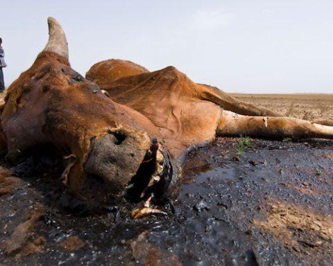 Main Somali drought